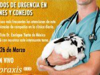 """En VIVO: """"Manejo de Urgencias en Mamíferos Exóticos: Hurones y Conejos"""""""