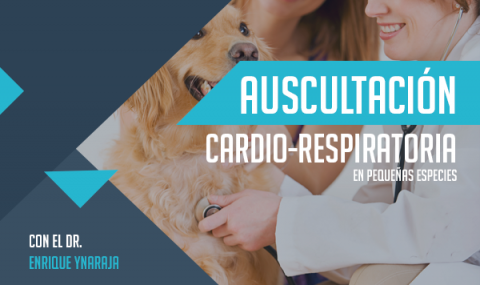 Auscultación Cardio-Respiratoria en Pequeñas especies