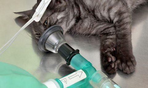 Oxigenoterapia y Reanimación Cardiopulmonar
