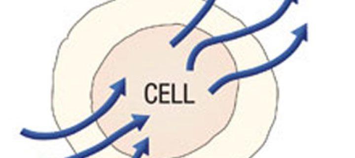 El metabolismo celular