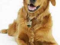 ¿Feliz? ¿Molesto? ¿Ansioso? ¿Cómo podemos medir las emociones de los animales?
