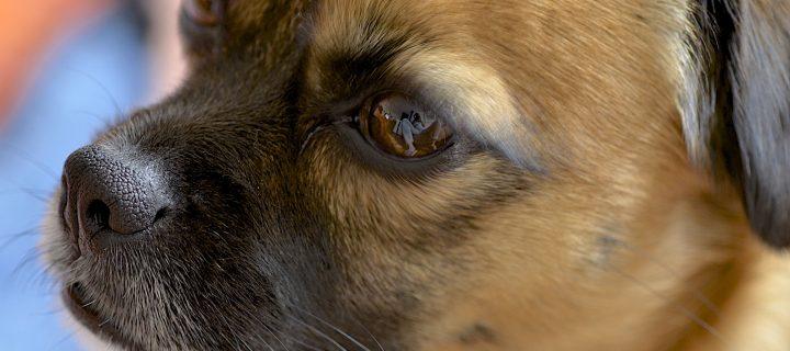 Tratamiento de los tumores cerebrales profundos en los perros