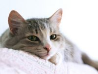 Factores de riesgo del cáncer felino y sus implicaciones en el cáncer humano