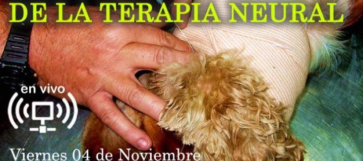 EnVIVO: Aplicación Clínica de la Terapia Neural en Animales de Compañía