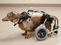 Investigan Nuevo Tratamiento para Lesiones en la Medula Espinal