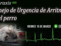 """En VIVO: """"Manejo de Urgencia de Arritmias Ventriculares en el Perro"""""""