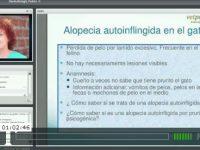 Video: Dermatología Felina