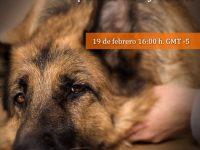 Pregúntale al Experto: Protocolos Analgésicos para Caninos y Felinos