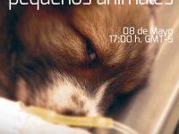 Pregúntale al Experto: Fluidoterapia en pequeños animales