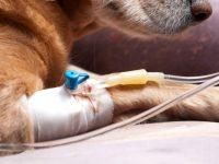 Compartiendo ideas: conservando catéteres intravenosos III