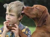 El perro asocia el placer con el olor de su dueño