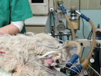 Reto Veterinario: Electrocardiograma