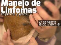 Manejo de Linfomas en perros y gatos
