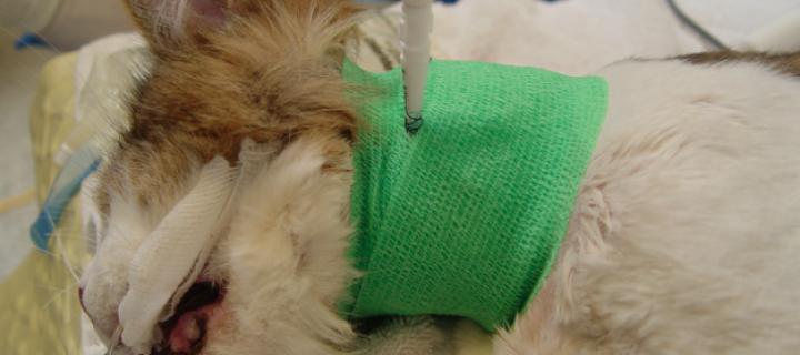 ¿Cómo insertar un tubo de esofagostomía?