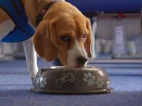 Perro conquista el corazón de empleados de aeropuerto
