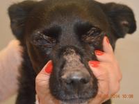 Reto Veterinario: Dermatología canina