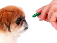 Alarmante Cifra de Casos de Intoxicación por Medicamentos en Mascotas