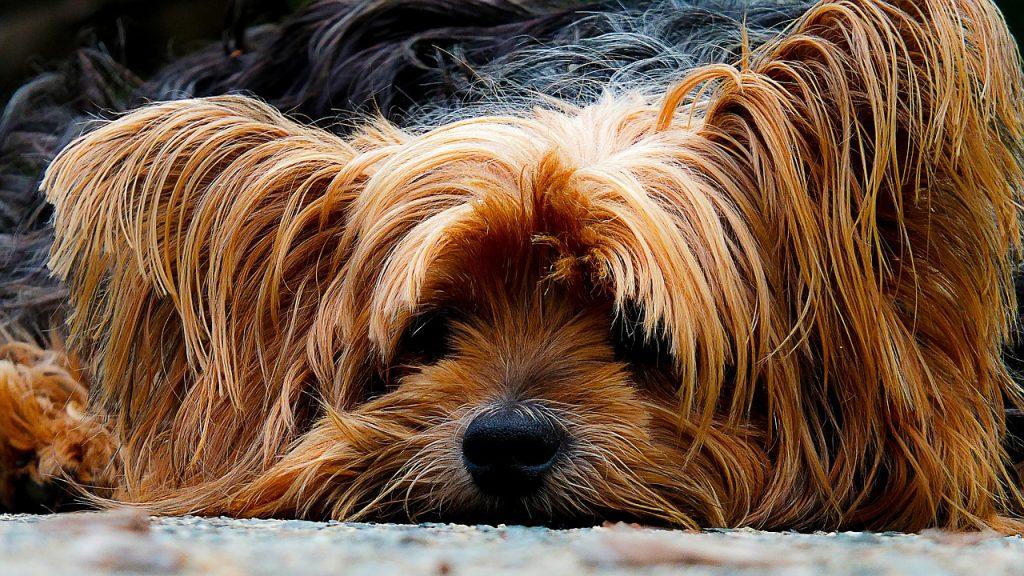 dog-200942_1280