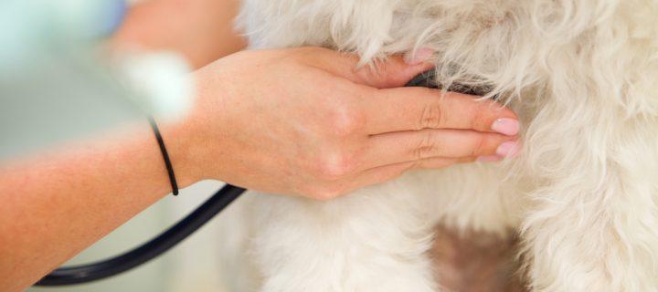 Test de autoaprendizaje: Electrocardiografía en perros y gatos