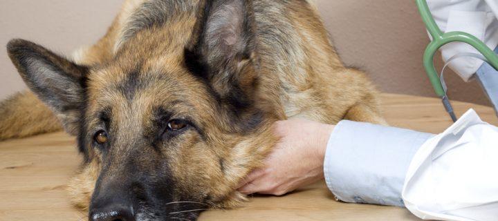 VIDEO: Protocolos Analgésicos para Caninos y Felinos