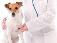 Sonidos respiratorios en perros y gatos
