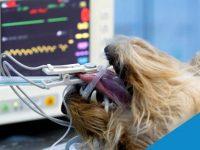 Reto Veterinario: ECG en cirugía