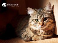 Reto Veterinario: Diagnostiquemos a esta gatita con sed