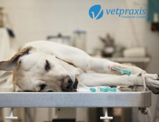 Reto Veterinario: Desafió Quirúrgico