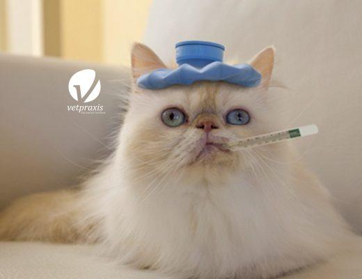 Reto Veterinario: Gata deshidratada