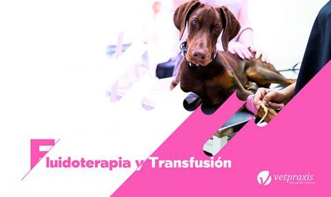 Fluidoterapia y Transfusión en caninos y felinos
