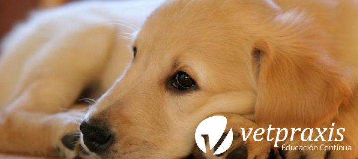 Reto Veterinario: Paciente canino con masa de 4 cm en lomo cervical