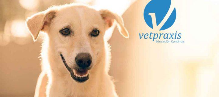 Reto Veterinario: Consulta dermatológica