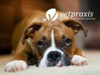 Reto Veterinario: Anestesia en quirófano